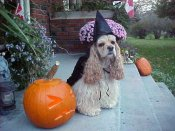 Lily at Halloween -