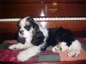 Ruby... Damien's sister -